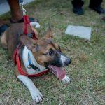บริการผ่าตัดทำหมันและฉีดวัคซีนป้องกันโรคพิษสุนัขบ้า